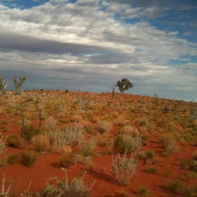 Typical desert scene